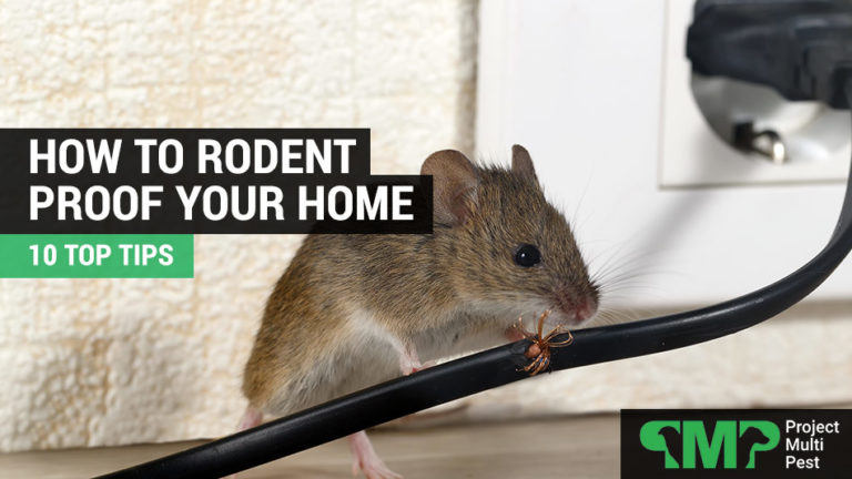 how to rodent proof your home