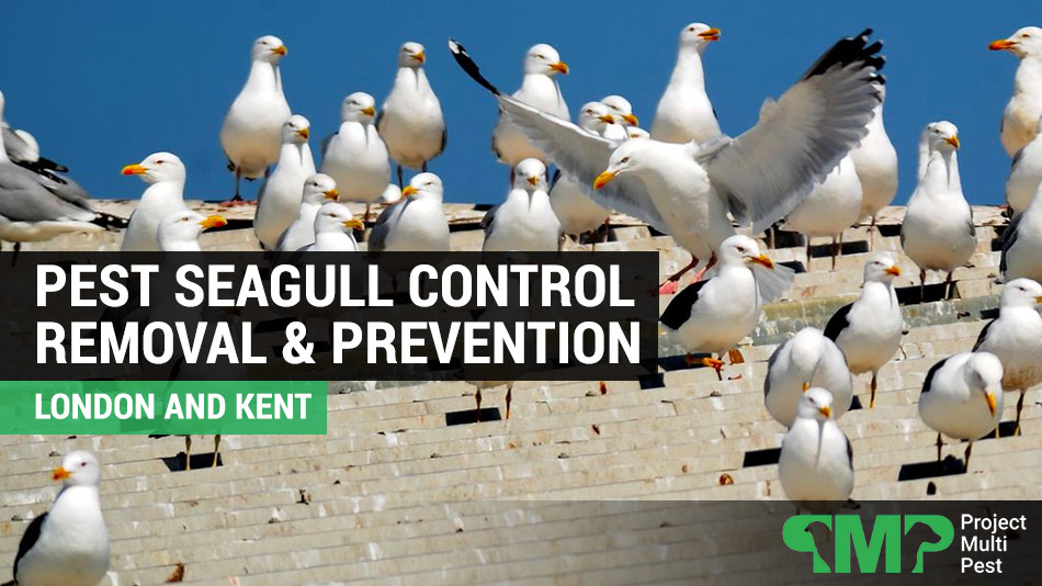 pest seagull control london and kent