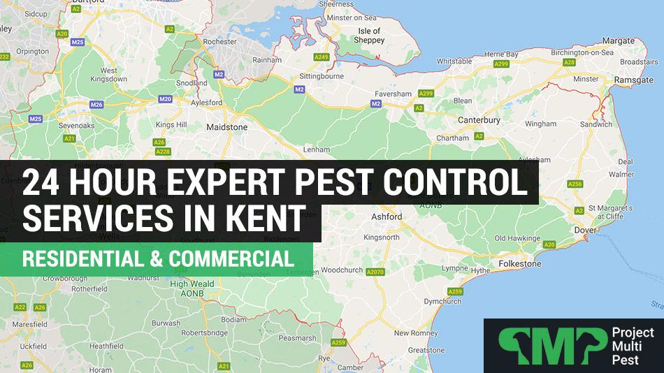 24 hour pest control kent