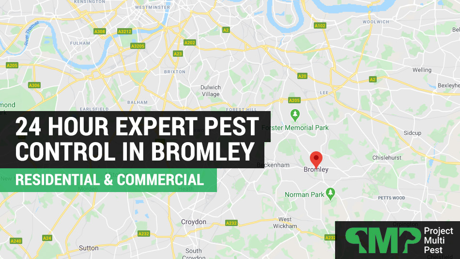 24 hour pest control services Bromley, South East London