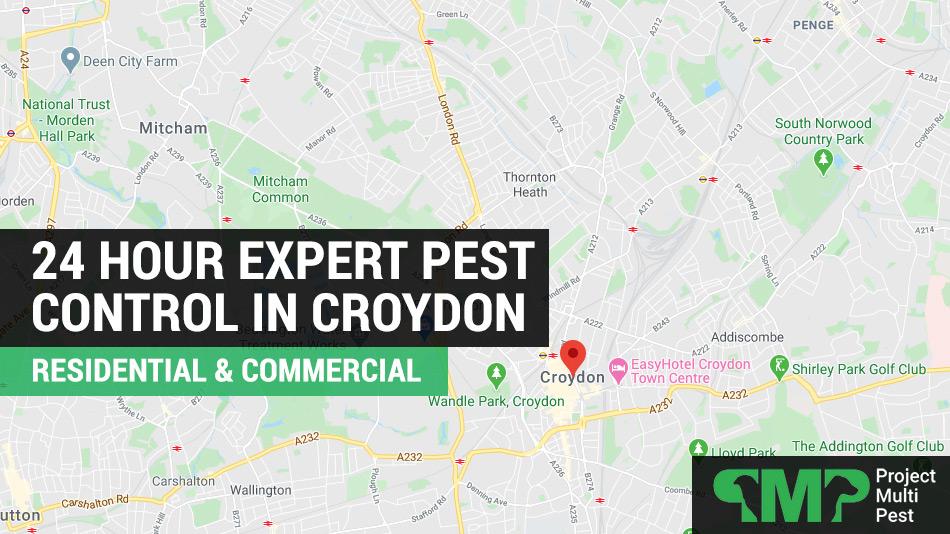 24 hour pest control services Croydon