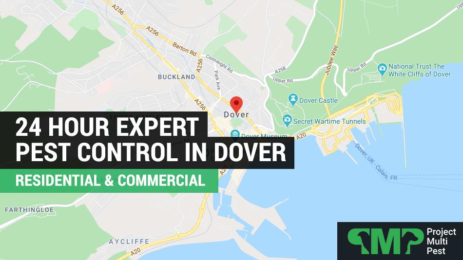 24 hour pest control services Dover, Kent