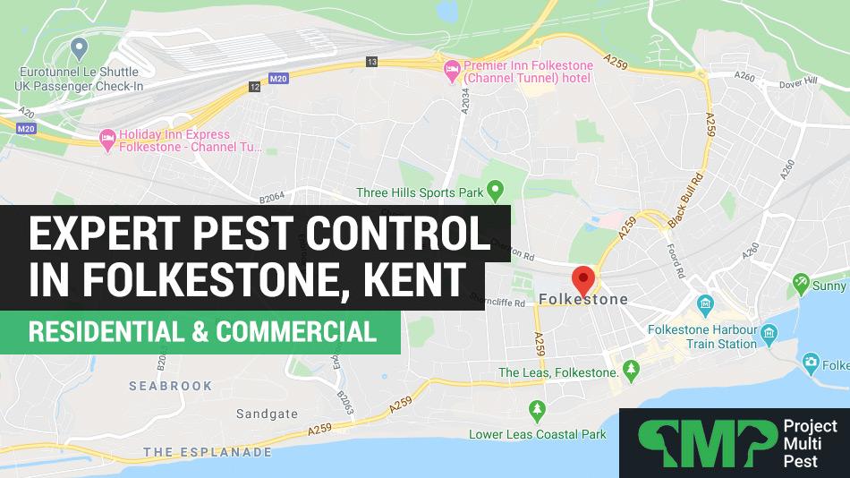 24 hour pest control services folkestone, kent