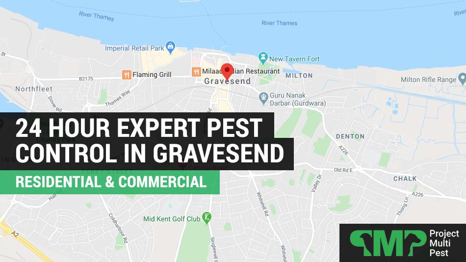 24 hour pest control services Gravesend, Kent