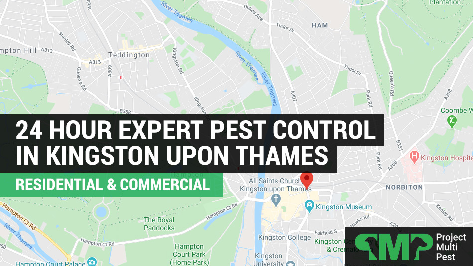 24 hour pest control services kingston upon thames
