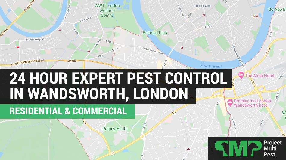 24 hour pest control services in Wandsworth