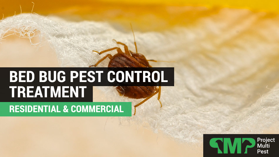 bed bug pest control in london
