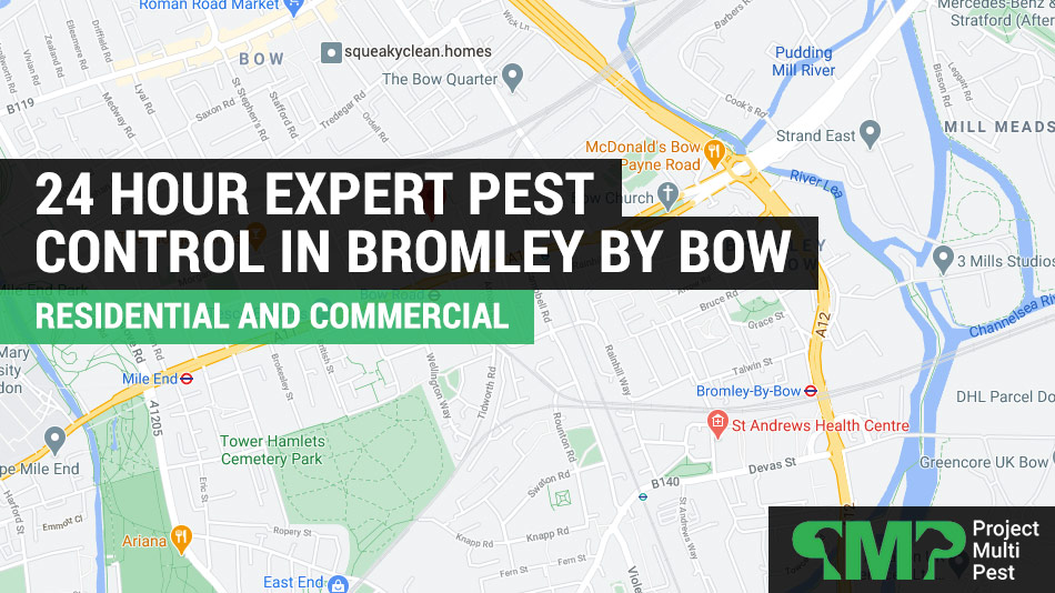 pest control in Bromley By Bow
