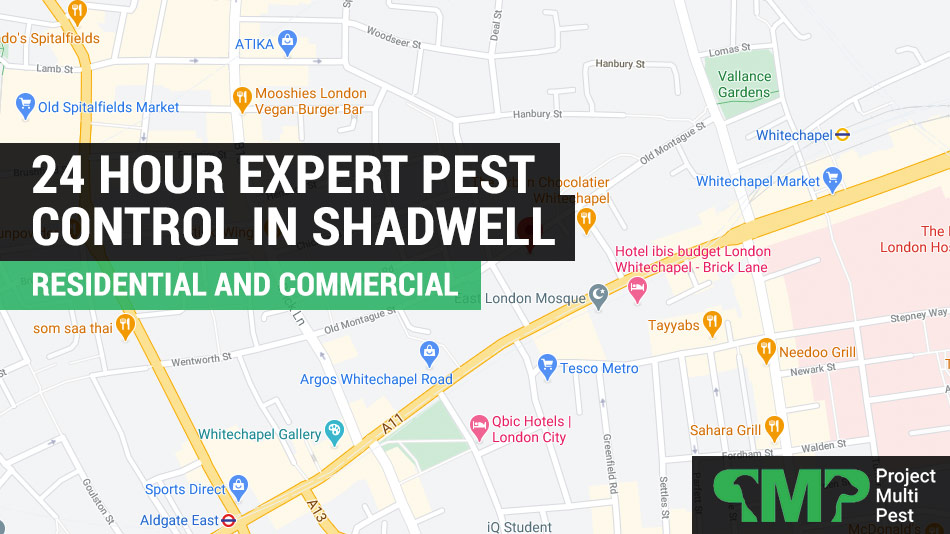 pest control in Shadwell E1 London