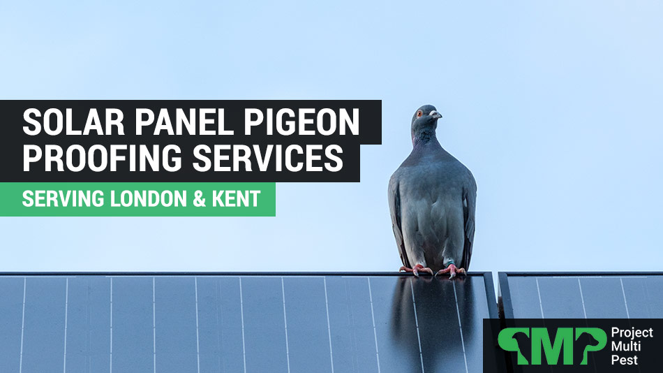 solar panel pigeon proofing services in London