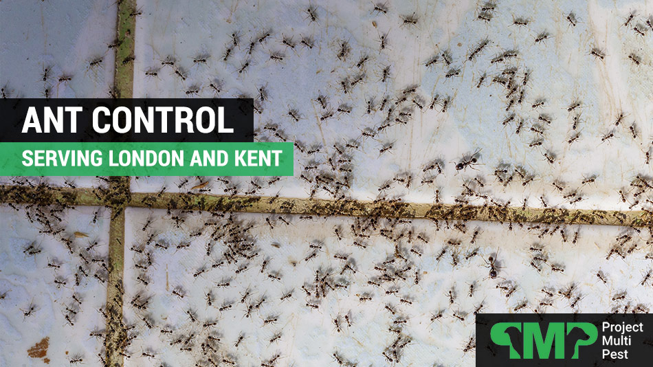 ant pest control london and kent