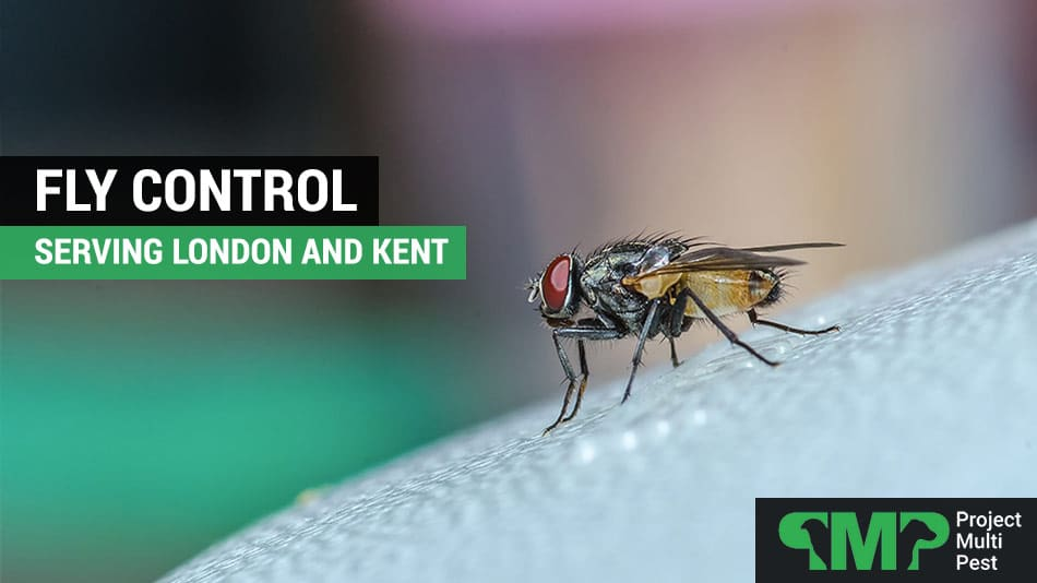 fly pest control london and kent