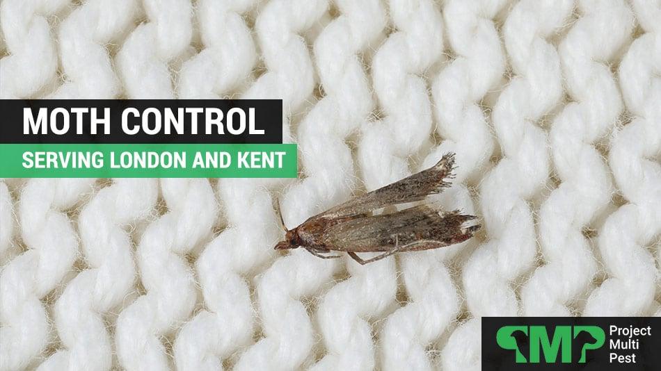 moth pest control london and kent