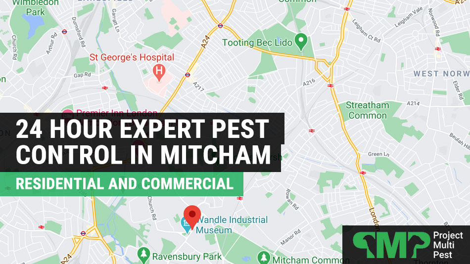 pest control in Mitcham London