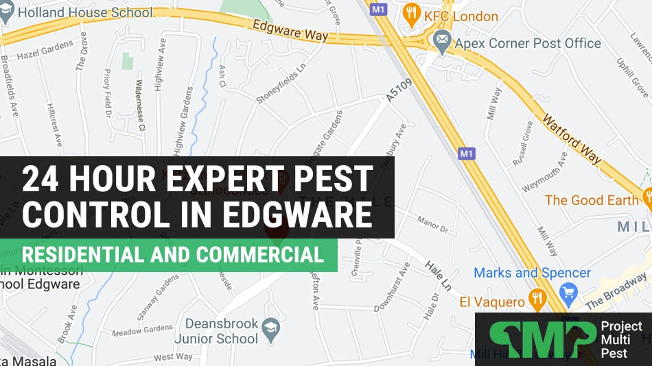 pest control in Edgware London