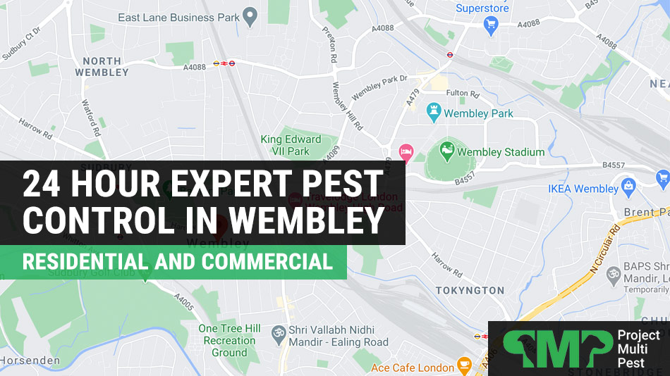 pest control in Wembley London