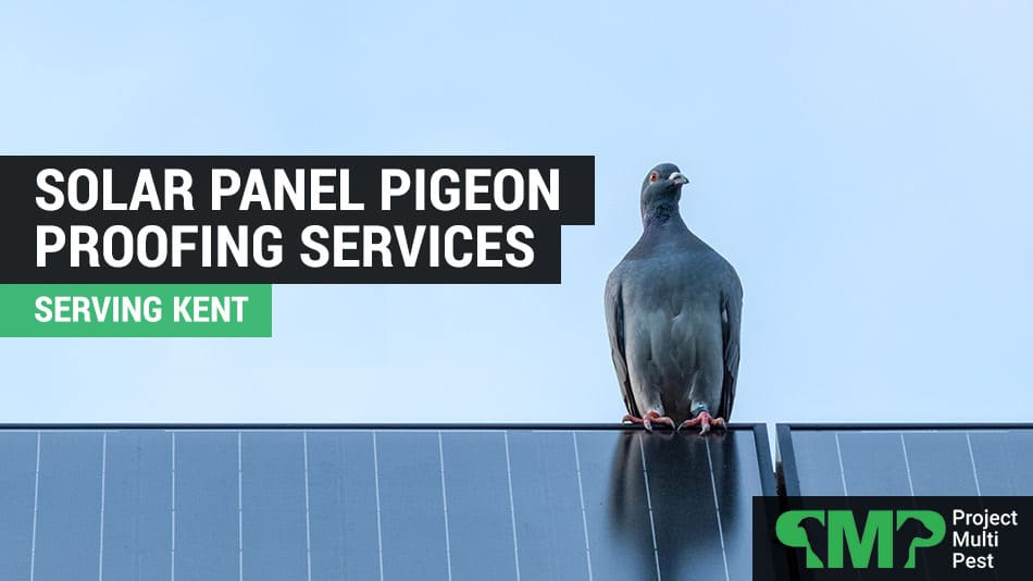 solar panel pigeon proofing kent
