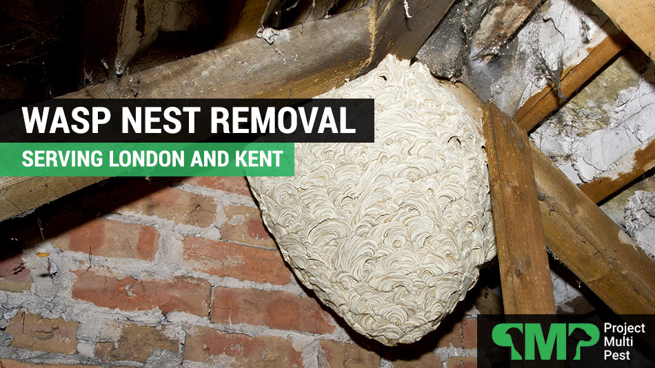 wasp nest removal in London and Kent