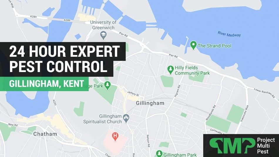 24 hour pest control Gillingham in Kent