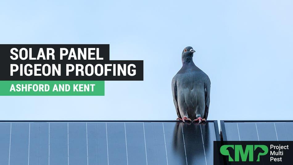 Solar Panel Pigeon Bird Proofing Ashford