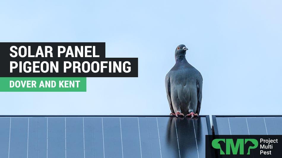 Solar Panel Pigeon Bird Proofing Dover