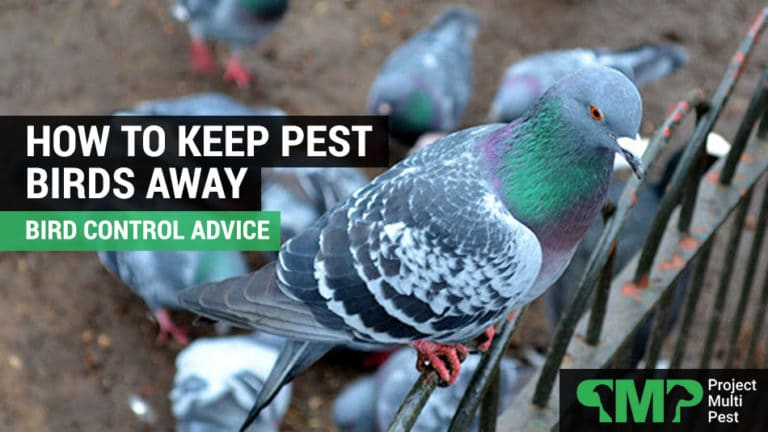 how to keep pest birds away