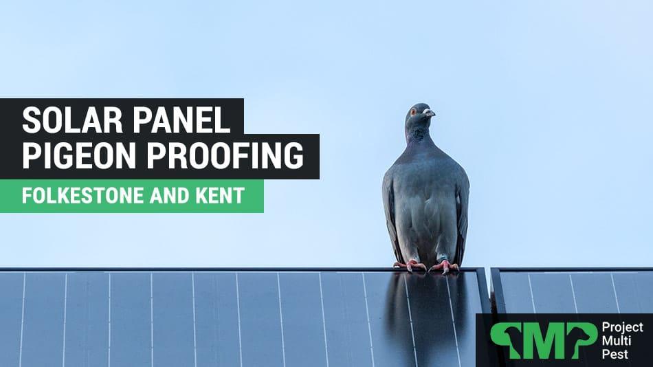 Solar Panel Pigeon Bird Proofing in Folkestone Kent