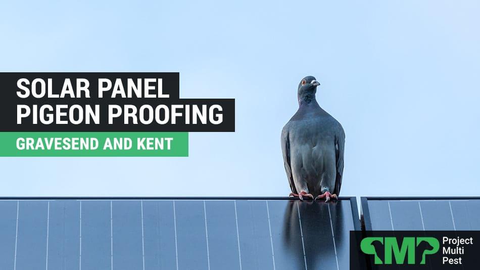 Solar Panel Pigeon Bird Proofing in Gravesend Kent