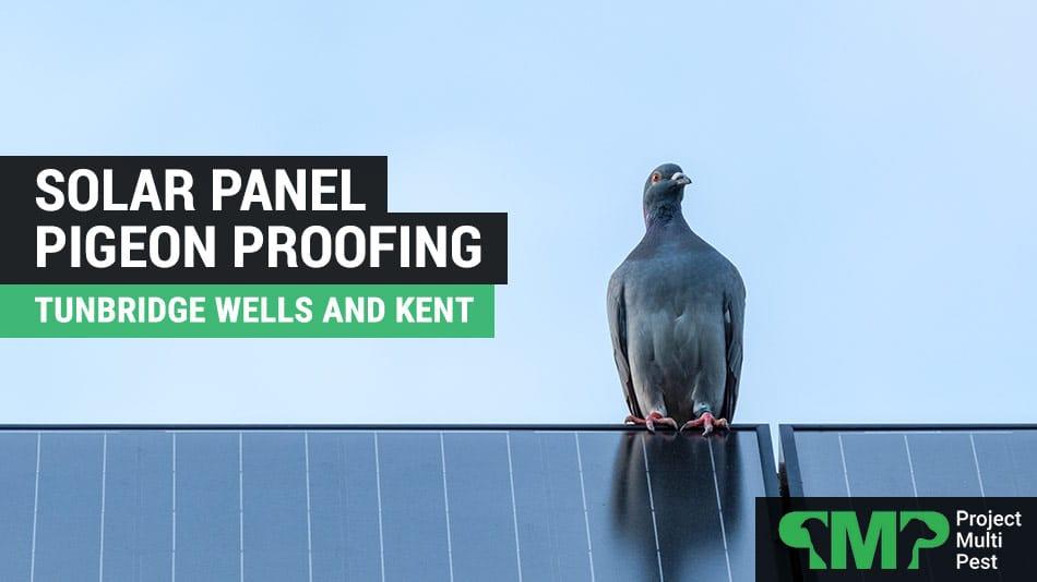 Solar Panel Pigeon Bird Proofing in Tunbridge Wells