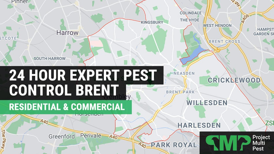Pest control in Brent London 24 hour call out