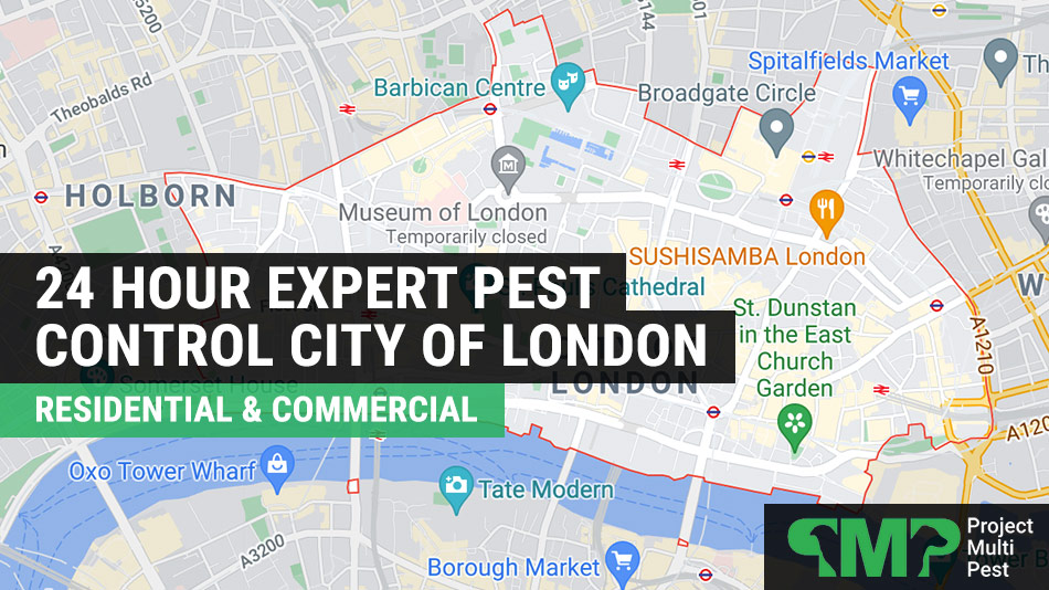 Pest control in City of London