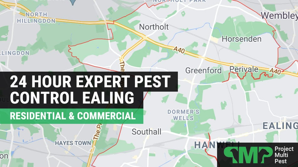 24 hour pest control services in ealing