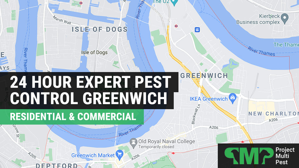 Pest control services in Greenwich