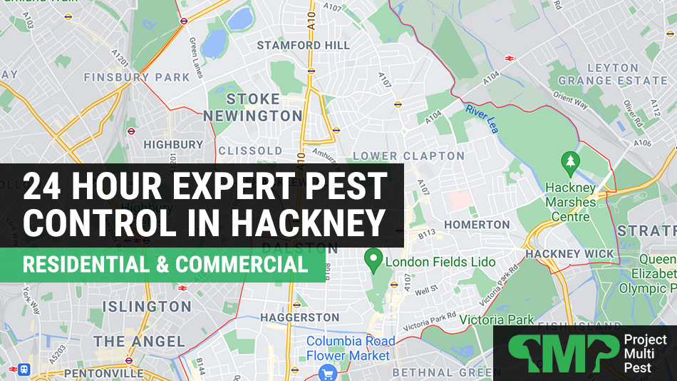Pest control in Hackney London 24 hour services