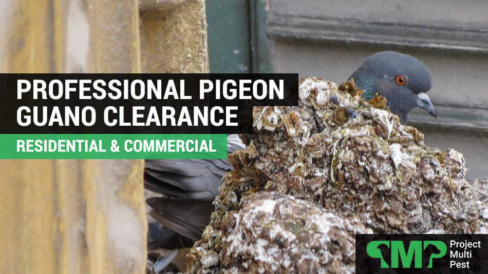 pigeon guano clearance in london